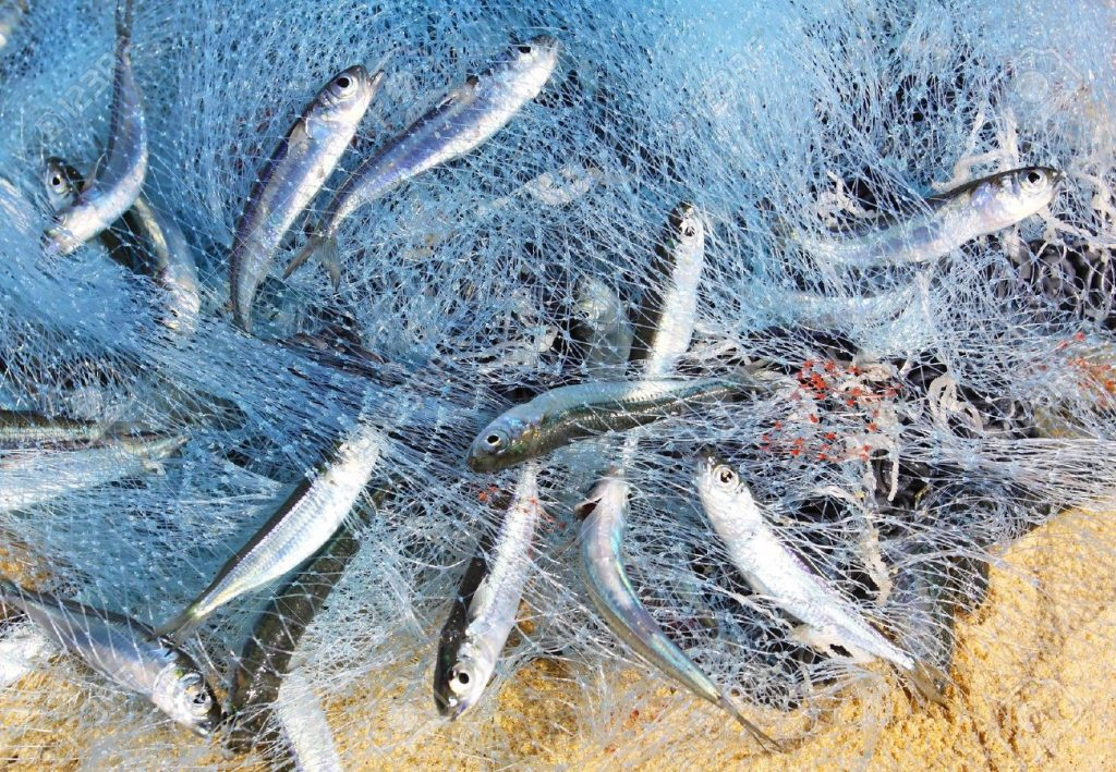 Ministry of Climate Change and Environment Begins Enforcing Decree Regulating Surface Fishing Using Surrounding Nets