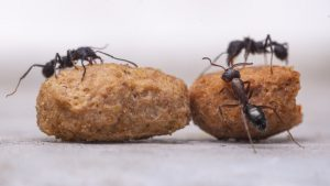 Inspiring ants